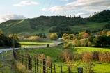 agricultural;agriculture;autuminal;autumn;autumn-colour;autumn-colours;autumnal;bend;bends;color;colors;colour;colours;corner;corners;country;countryside;deciduous;driving;fall;farm;farming;farmland;farms;fecnes;fence;fence-line;fence-lines;fenceline;fencelines;field;fields;green;highway;highways;King-Country;leaf;leaves;Mapara-Stream;meadow;meadows;N.I.;N.Z.;New-Zealand;NI;North-Island;NZ;open-road;open-roads;paddock;paddocks;pasture;pastures;road;road-trip;roads;rural;season;seasonal;seasons;straight;Te-Kuiti;transport;transportation;travel;traveling;travelling;tree;trees;trip;Waikato-Region