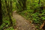 bush;green-lush;N.Z.;native-bush;native-forest;New-Zealand;North-Is;North-Island;Nth-Is;NZ;track;tracks;verdant;Waikato;Waikato-Region;Waitomo-District;walking-track;walking-tracks