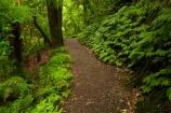 bush;green-lush;Mangapohue-Natural-Bridge;N.Z.;native-bush;native-forest;New-Zealand;North-Is;North-Island;Nth-Is;NZ;track;tracks;verdant;Waikato;Waikato-Region;Waitomo-District;walking-track;walking-tracks