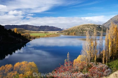 autuminal;autumn;autumn-colour;autumn-colours;autumnal;briar;briar-bush;briar-bushes;briars;calm;Central-Otago;color;colors;colour;colours;deciduous;fall;Glendhu-Bay;lake;Lake-Wanaka;lakes;leaf;leaves;N.Z.;New-Zealand;NZ;Otago;Paddock-Bay;placid;poplar;poplar-tree;poplar-trees;poplars;quiet;reflection;reflections;rosehip;rosehip-bush;rosehip-bushes;rosehips;S.I.;season;seasonal;seasons;serene;SI;smooth;South-Island;Southern-Lakes;Southern-Lakes-District;Southern-Lakes-Region;still;tranquil;tree;trees;Wanaka;water;willow;willow-tree;willow-trees;willows