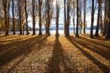 autuminal;autumn;autumn-colour;autumn-colours;autumn-leaves;autumnal;avenue;avenues;Central-Otago;color;colors;colour;colours;deciduous;fall;golden;lake;Lake-Wanaka;lakes;leaf;leaves;N.Z.;New-Zealand;NZ;Otago;poplar;poplar-tree;poplar-trees;poplars;S.I.;season;seasonal;seasons;shadow;shadows;SI;South-Island;Southern-Lakes;Southern-Lakes-District;Southern-Lakes-Region;tree;trees;trunk;trunks;Wanaka;yellow