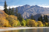 autuminal;autumn;autumn-colour;autumn-colours;autumnal;Camp;Camp-Ground;Camp-Grounds;Camp-Site;Camp-Sites;campground;campgrounds;Camping;Camping-Area;Camping-Areas;Camping-Ground;Camping-Grounds;Camping-Site;Camping-Sites;Caravan-Park;Caravan-Parks;Central-Otago;color;colors;colour;colours;deciduous;End-Peak;fall;Glendhu-Bay;Glendhu-Bay-Campground;Harris-Mountains;Holiday;Holiday-Park;Holiday-Parks;holidays;lake;Lake-Wanaka;lakes;leaf;leaves;N.Z.;New-Zealand;NZ;Otago;S.I.;season;seasonal;seasons;shoreline;shorelines;SI;South-Island;Southern-Lakes;Southern-Lakes-District;Southern-Lakes-Region;tree;trees;vacation;vacations;Wanaka;water;willow;willow-tree;willow-trees;willows