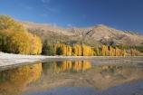 autuminal;autumn;autumn-colour;autumn-colours;autumnal;calm;Central-Otago;color;colors;colour;colours;deciduous;fall;golden;lake;Lake-Wanaka;lakes;leaf;leaves;Mount-Alpha;Mt-Alpha;Mt.-Alpha;N.Z.;New-Zealand;NZ;Otago;placid;poplar;poplar-tree;poplar-trees;poplars;quiet;reflection;reflections;S.I.;season;seasonal;seasons;serene;SI;smooth;South-Is.;South-Island;Southern-Lakes;Southern-Lakes-District;Southern-Lakes-Region;still;tranquil;tree;trees;Wanaka;water;yellow