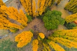 aerial;Aerial-drone;Aerial-drones;aerial-image;aerial-images;aerial-photo;aerial-photograph;aerial-photographs;aerial-photography;aerial-photos;aerial-view;aerial-views;aerials;autuminal;autumn;autumn-colour;autumn-colours;autumnal;Cadrona;Cardrona;Cardrona-Valley;Central-Otago;color;colors;colour;colours;deciduous;Drone;Drones;fall;gold;golden;leaf;leaves;N.Z.;New-Zealand;NZ;Otago;poplar;poplar-tree;poplar-trees;poplars;Quadcopter-aerial;Quadcopters-aerials;season;seasonal;seasons;SI;South-Island;Sth-Is;tree;trees;U.A.V.-aerial;UAV-aerials;Wanaka;yellow