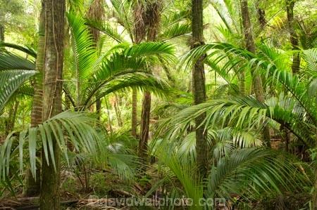 beautiful;beauty;bush;endemic;fern;ferns;forest;forests;Great-Walk;green;Heaphy-Track;Kahurangi-National-Park;Karamea;lush;national-park;national-parks;native;native-bush;natives;natural;nature;New-Zealand;nikau;nikau-palm;nikaus;Nothofagus;ponga;pongas;punga;pungas;rain-forest;rain-forests;rain_forest;rain_forests;rainforest;rainforests;scene;scenic;South-Island;southern-beeches;tree;tree-fern;tree-ferns;trees;verdant;West-Coast;Westland