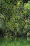 beautiful;beauty;brook;brooks;bush;color;colors;colour;colours;creek;creeks;endemic;fern;ferns;forest;forests;green;lush;N.Z.;national-park;national-parks;native;native-bush;natives;natural;nature;New-Zealand;NZ;Paparoa-N.P.;Paparoa-National-Park;Paparoa-NP;Pororari-River;Punakaiki;rain-forest;rain-forests;rain_forest;rain_forests;rainforest;rainforests;river;rivers;S.I.;scene;scenic;SI;South-Island;stream;streams;tree;trees;unspoilt;untouched;verdant;West-Coast;Westland;wilderness