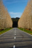 avenue;avenues;Buller-District;Buller-Region;centre-line;centre-lines;centreline;centrelines;driving;highway;highways;New-Zealand;NZ;open-road;open-roads;road;road-trip;roads;S.I.;South-Is;South-Island;state-highway-65;state-highway-sixty-five;Sth-Is;straight;transport;transportation;travel;traveling;travelling;tree;trees;trip;vanishing-point;West-Coast