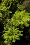 aerial-walkway;aerial-walkways;bush;Cythea-dealbata;fern;ferns;forest;forests;green;Hokitika;lush;N.Z.;native-bush;native-forest;native-forests;native-tree;native-trees;native-woods;natural;nature;New-Zealand;NZ;ponga;pongas;punga;pungas;S.I.;SI;silver-fern;silver-ferns;South-Is;South-Island;Sth-Is;tree;tree-fern;tree-ferns;Tree-top-Walk;Tree-top-Walkway;tree_fern;tree_ferns;Tree_top-Walk;Tree_top-Walkway;treefern;trees;Treetop-Walk;Treetop-Walkway;verdant;walkway;walkways;West-Coast;West-Coast-Treetop-Walk;West-Coast-Treetop-Walkway;Westland;wood;woods