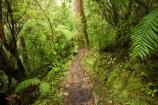 beautiful;beauty;bush;endemic;fern;ferns;forest;forests;green;Kahurangi-National-Park;Karamea;lush;native;native-bush;natives;natural;nature;New-Zealand;Nothofagus;Oparara-Arch;Oparara-Basin;ponga;pongas;punga;pungas;rain-forest;rain-forests;rain_forest;rain_forests;rainforest;rainforests;scene;scenic;South-Island;southern-beeches;timber;Track;tracks;tree;tree-fern;tree-ferns;tree-trunk;tree-trunks;trees;trunk;trunks;verdant;walking-track;walking-tracks;West-Coast;Westland;wood;woods