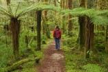 beautiful;beauty;bush;endemic;fern;ferns;forest;forests;green;hike;hiker;hikers;hiking;Kahurangi-National-Park;Karamea;lush;Moira-Gate-Arch;moss;mosses;mossy;national-park;national-parks;native;native-bush;natives;natural;nature;New-Zealand;Nothofagus;Oparara-Basin;people;person;ponga;pongas;punga;pungas;rain-forest;rain-forests;rain_forest;rain_forests;rainforest;rainforests;scene;scenic;South-Island;southern-beeches;timber;Track;tracks;tree;tree-fern;tree-ferns;tree-trunk;tree-trunks;trees;trunk;trunks;verdant;walker;walkers;walking;walking-track;walking-tracks;West-Coast;Westland;wood;woods