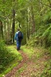 beautiful;beauty;bush;endemic;Fenian-Track;forest;forests;green;hike;hiker;hikers;hiking;Kahurangi-National-Park;Karamea;lush;moss;mosses;mossy;national-park;national-parks;native;native-bush;natives;natural;nature;New-Zealand;people;person;rain-forest;rain-forests;rain_forest;rain_forests;rainforest;rainforests;scene;scenic;South-Island;track;tracks;tramp;tramper;trampers;tramping;tree;trees;trek;treker;trekers;treking;trekker;trekkers;trekking;verdant;walk;walker;walkers;walking;walking-track;walking-tracks;West-Coast;Westland