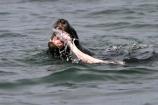 sea;fish;water;ocean;seal;eat;eating;chew;chewing;tooth;teeth;food;kill;attack