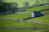 agricultural;agriculture;Britain;British-Isles;country;countryside;dry-stone-wall;dry-stone-walls;dry_stone-wall;dry_stone-walls;drystone-wall;drystone-walls;England;English-countryside;Europe;farm;Farm-Building;Farm-Buildings;Farm-Shed;Farm-Sheds;farming;farmland;farms;fence;fence-line;fence-lines;fence_line;fence_lines;fenceline;fencelines;fences;field;fields;G.B.;GB;grass;Great-Britain;green;heritage;historic;livestock;Malham;meadow;meadows;North-Yorkshire;Northern-England;paddock;paddocks;pasture;pastures;rock-wall;rock-walls;rural;Shearing-Shed;Shearing-Sheds;sheep;Sheep-Shed;Sheep-Sheds;stock;stone-building;stone-buildings;stone-farm-building;stone-farm-buildings;stone-fence;stone-fences;stone-wall;stone-walling;stone-wallings;stone-walls;tradition;traditional;U.K.;UK;United-Kingdom;Wool-Shed;Wool-Sheds;woolshed;woolsheds;Yorkshire;Yorkshire-countryside;Yorkshire-Dales;Yorkshire-Dales-National-Park;Yorkshire-Farm;Yorkshire-Farmland;Yorkshire-Farmlands;Yorkshire-Farms