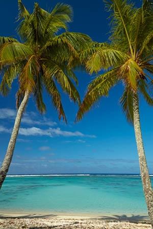 aquamarine;azure;beach;beaches;blue;clean-water;clear-water;cobalt;cobalt-blue;cobalt-ultramarine;cobaltultramarine;Coconut-palm;Coconut-palm-tree;Coconut-palm-trees;Coconut-palms;Coconut-tree;Coconut-trees;Cook-Is;Cook-Islands;frond;fronds;Pacific;palm;palm-frond;palm-fronds;palm-tree;palm-trees;palms;paradise;Rarotonga;South-Pacific;teal;tropcial-water;tropical;tropical-beach;tropical-island;tropical-islands;tropical-palm-tree;tropical-paradise;turquoise;ultramarine;water