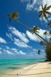 aquamarine;beach;beaches;blue;clean-water;clear-water;coconut-palm;coconut-palms;Cook-Is;Cook-Islands;ocean;Pacific;Pacific-Ocean;palm;palm-tree;palm-trees;palms;paradise;Rarotonga;sea;South-Pacific;tropcial-water;tropical;tropical-beach;tropical-island;tropical-islands;tropical-palm-tree;turquoise