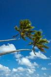 blue-skies;blue-sky;cloud;clouds;coconut-palm;coconut-palms;Cook-Is;Cook-Islands;Pacific;palm;palm-tree;palm-trees;palms;paradise;Rarotonga;South-Pacific;tropical;tropical-island;tropical-islands;tropical-palm-tree;two