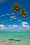 aquamarine;beach;beaches;blue;clean-water;clear-water;cobalt-blue;cobalt-ultramarine;cobaltultramarine;coconut-palm;coconut-palms;Cook-Is;Cook-Islands;ocean;Pacific;Pacific-Ocean;palm;palm-tree;palm-trees;palms;paradise;Rarotonga;sea;South-Pacific;tropcial-water;tropical;tropical-beach;tropical-island;tropical-islands;tropical-palm-tree;turquoise;two
