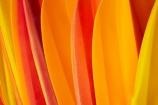 bright;canoe;canoeing;canoes;color;colorful;colourful;hire-kayaks;kayak;kayak-hire;kayak-rental;kayaking;kayaks;New-Zealand;North-Island;Northland;NZ;orange;red;rental-kayaks;ride-on-top-kayak;ride-on-top-kayaks;sea-kayak;sea-kayaking;sea-kayaks;sit-on-top-kayak;sit-on-top-kayaks;summer;yellow;tone;tones;shades