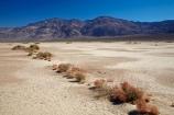 4216;alkalii-flat;america;american;barren;barreness;basin;bush;bushes;CA;california;clay-pan;clay-pans;death;Death-Valley;Death-Valley-N.P.;Death-Valley-National-Park;depression;desert;desert-plant;desert-plants;deserts;desolate;dry;dry-lake;dry-lake-bed;dry-lake-beds;dry-lakes;empty;endorheic-basin;endorheric;endorheric-basin;endorheric-basins;endorheric-lake;extreme;flat;geographic;geography;glare;glary;Great-Basin;International-Biosphere-Reserve;Inyo-County;lake;lake-bed;lake-beds;lakes;mojave;Mojave-Desert;national;national-park;National-parks;pan;Panamint-Range;Panamint-Valley;pans;park;playa;playas;sabkha;saline;salt;salt-crust;salt-flat;salt-flats;salt-lake;salt-lakes;salt-pan;salt-pans;salt_pan;salt_pans;saltpan;saltpans;salty;scrub;states;The-Great-Basin;U.S.A;United-States;United-States-of-America;usa;valley;vast;vlei;west-coast;West-United-States;West-US;West-USA;Western-United-States;Western-US;Western-USA;white;white-surface
