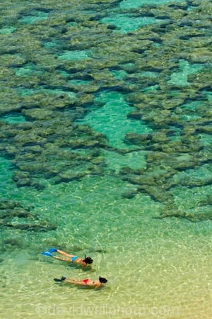 America;American;beach;beaches;coast;coastal;coastline;coastlines;coral-reef;coral-reefs;corals;dive-site;dive-sites;diving;ecosystem;environment;Hanauma;Hanauma-Bay;Hanauma-Bay-Beach;Hanauma-Bay-Nature-Preserve;Hanauma-Bay-Nature-Reserve;Hanauma-Bay-State-Park;Hanauma-Beach;Hanauma-Crater;Hawaii;Hawaiian-Islands;HI;Island-of-Oahu;leisure;marine;marine-environment;marine-life;marinelife;Oahu;Oahu;Oahu-Island;Ocean;oceanlife;Oceans;Outdoor;Outdoors;Outside;Pacific;people;person;Persons;Recreation;reef;reefs;sand;sandy;sea;sealife;seas;snorkelers;snorkeling;snorkellers;snorkelling;snorleler;snorleller;State-of-Hawaii;States;tourisim;tourism;tourist;tourists;tropical-beach;tropical-beaches;tropical-island;tropical-islands;tropical-reef;tropical-reefs;U.S.A;United-States;United-States-of-America;USA;visitor